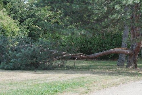 夏天, 太陽能, 樹, 氣候變化 的 免费素材照片