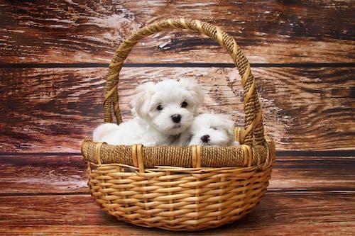 가정의, 강아지, 개, 귀의 무료 스톡 사진