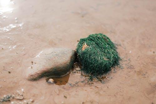 卵石, 小, 岩池, 成長 的 免费素材照片