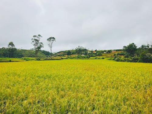 旅行, 旅行目的地, 景觀, 白米 的 免费素材照片