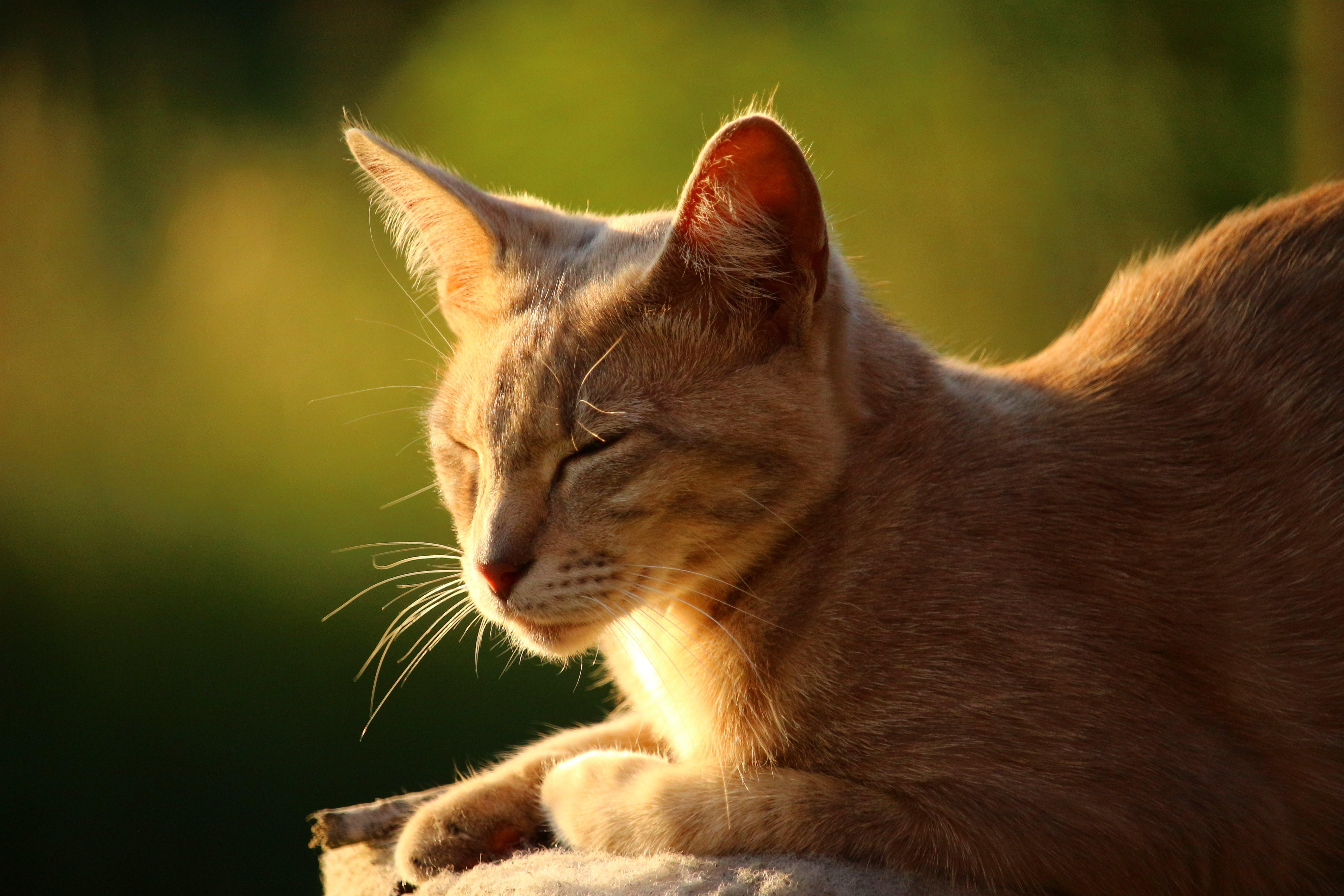 Free stock photo of summer, sun, kitten, cat