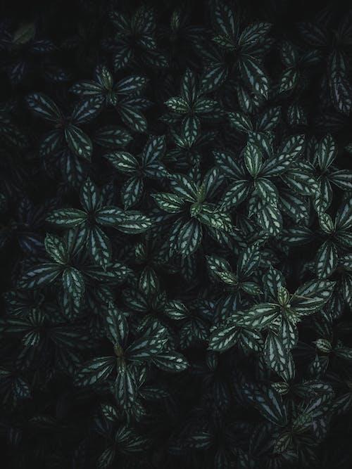 工場, 緑, 葉の無料の写真素材
