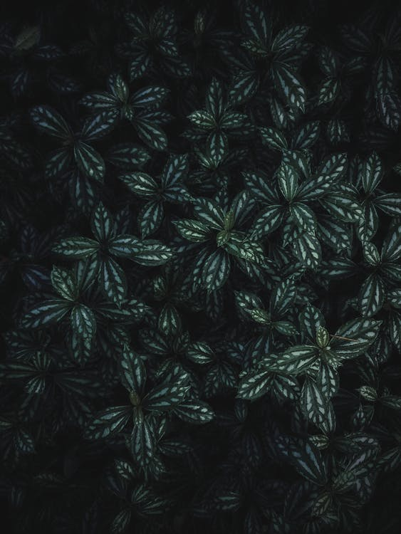bladeren, fabriek, groen