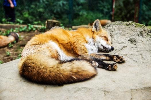 Free stock photo of wood, nature, animal, cute