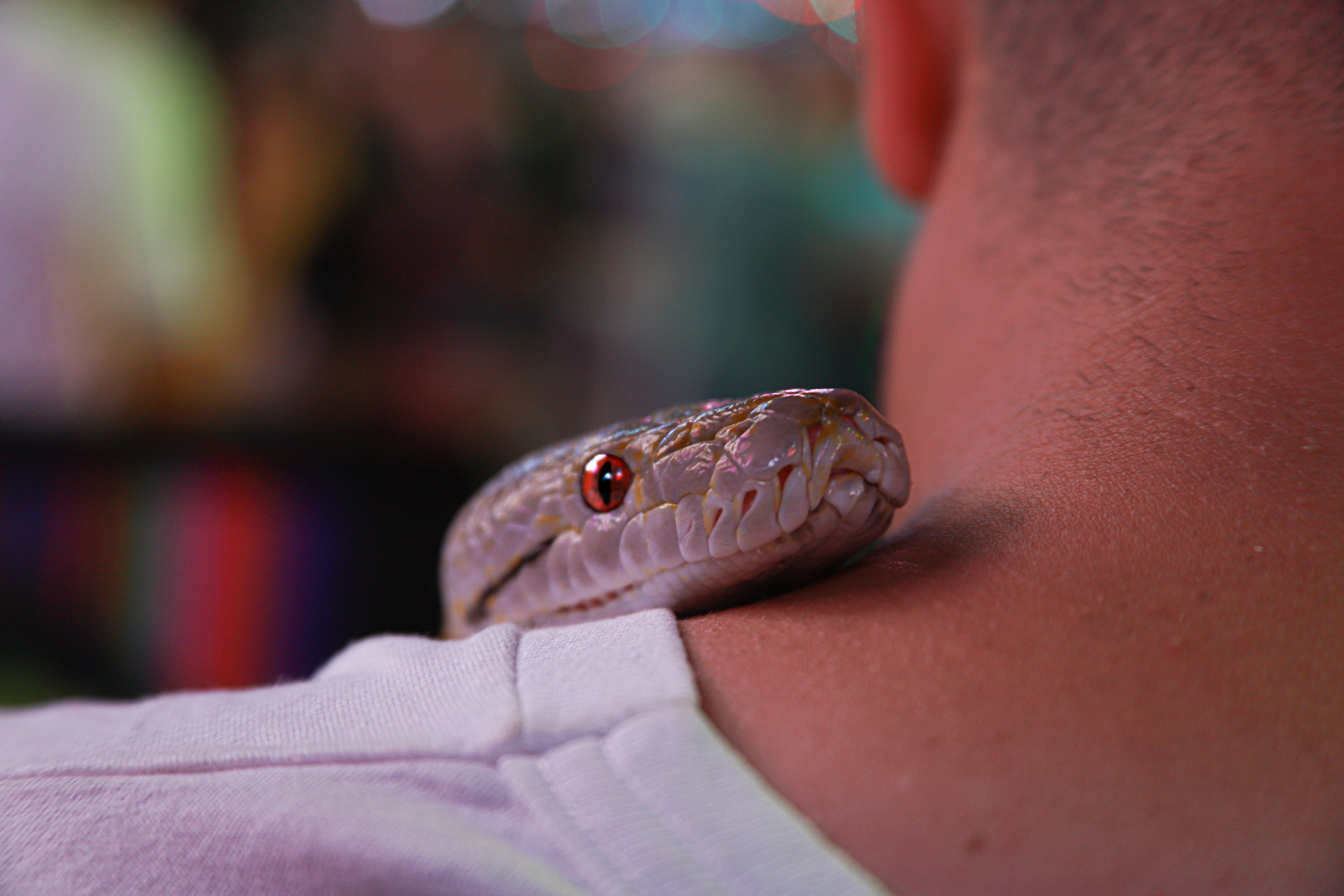 Gray Snake on Person's Neck