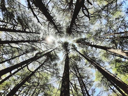 Fotobanka sbezplatnými fotkami na tému alžírsko, borovica, borovice, krása v prírode