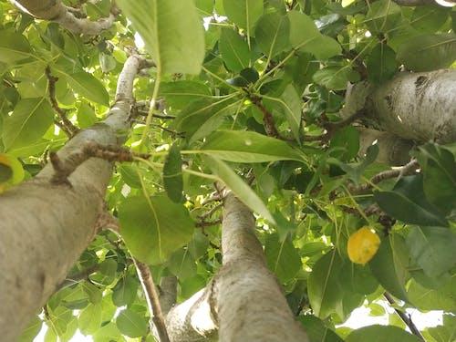 Gratis stockfoto met bomen, boom, groen