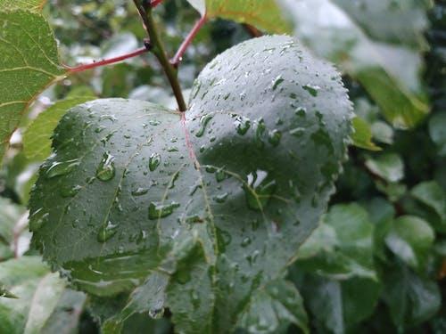 Ingyenes stockfotó eső, fa, kert, könnyek témában