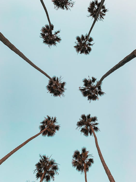 alt, arbres, cel