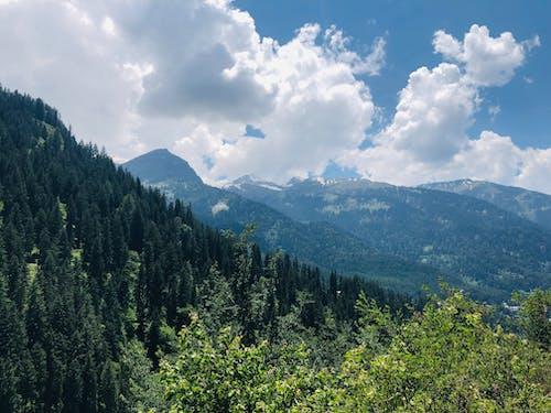 Foto d'estoc gratuïta de arbres, bell paisatge, blau, bonic