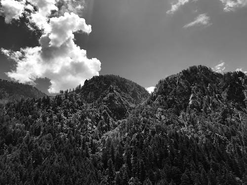 Foto d'estoc gratuïta de arbres, bell paisatge, blanc i negre, blau