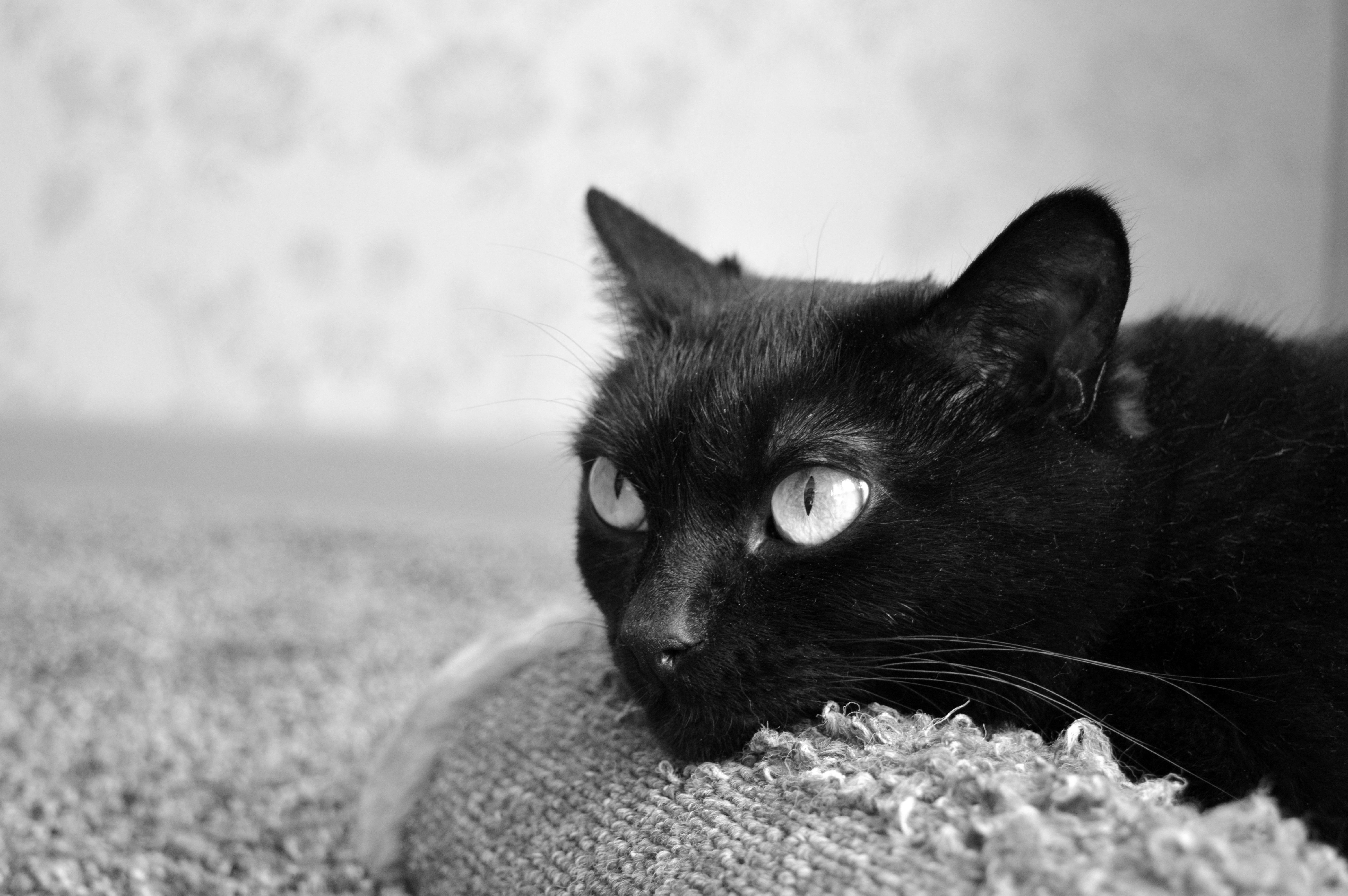 zadarmo tmavé lesbické mačička jesť