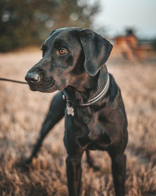 Immagine gratuita di animale, cagnolino, cane, cane nero