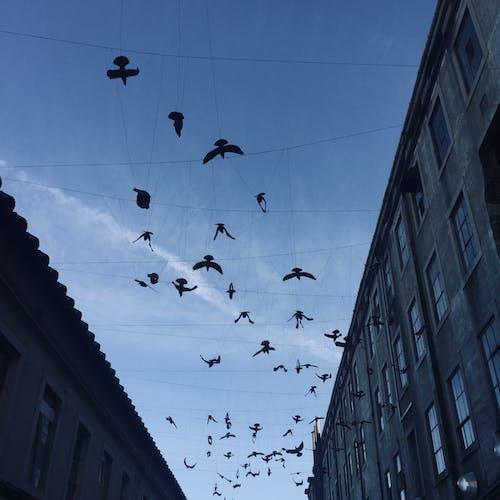 Immagine gratuita di cielo azzurro, Lisbona, strada, uccelli