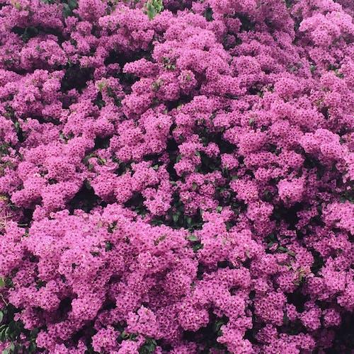 美麗的花, 調色, 里斯本 的 免費圖庫相片