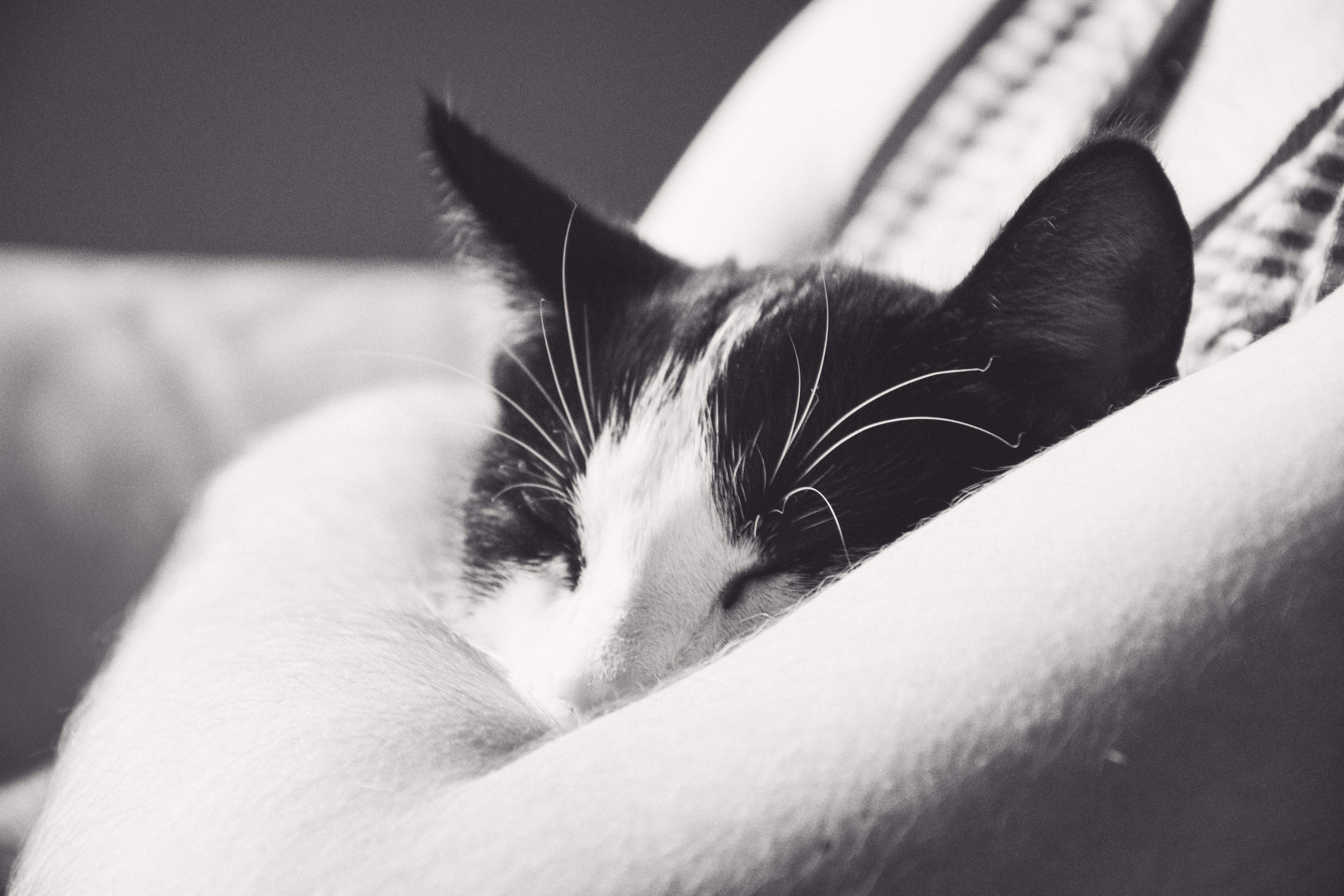 Černé obrázky zdarma kočička