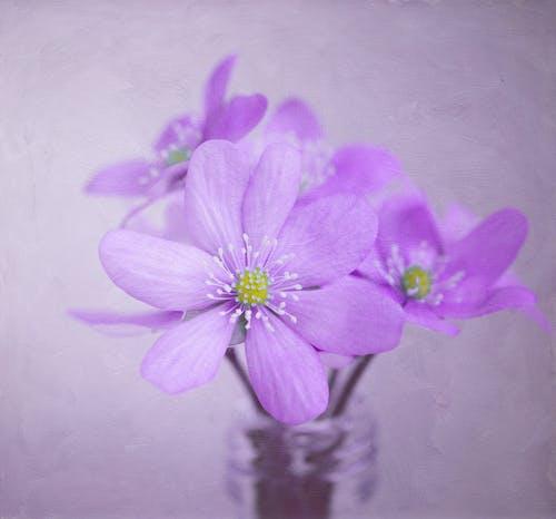 Darmowe zdjęcie z galerii z delikatny, flora, kolor, kwiaty