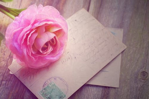 Pink Rose on Greetings Card