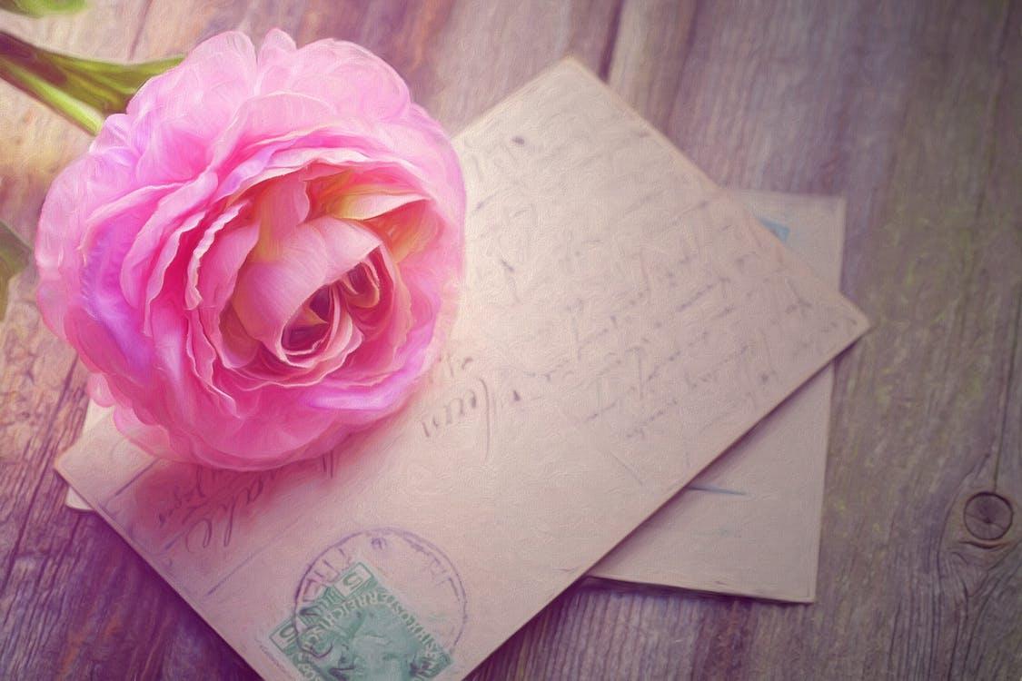 Pink Rose on Greetings Card