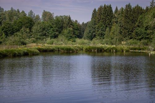 Immagine gratuita di avventura, blausee, boscoso, conifero