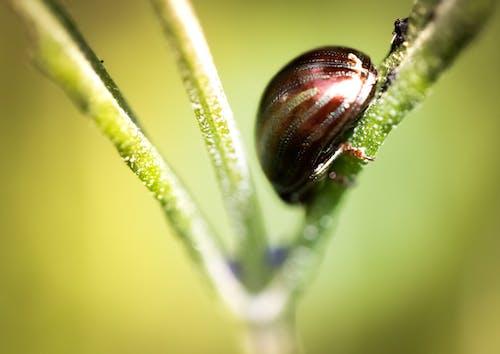 Ảnh lưu trữ miễn phí về ảnh macro, chụp ảnh côn trùng, chụp ảnh thiên nhiên, chụp ảnh động vật