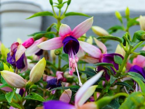夏天, 夏天的花, 布魯門, 漂亮 的 免費圖庫相片