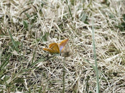 乾草, 夏天, 漂亮, 蝴蝶 的 免費圖庫相片