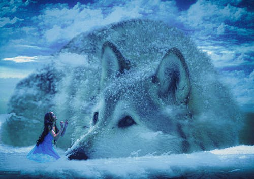 4k 바탕화면, 늑대, 어도비 포토샵, 오케이 bhargav의 무료 스톡 사진