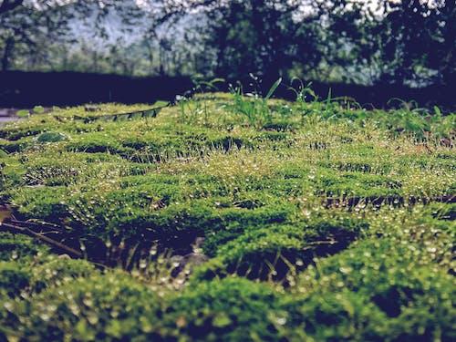 Ảnh lưu trữ miễn phí về cây xanh, giọt nước, rêu xanh