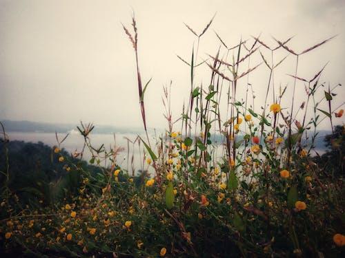 Ảnh lưu trữ miễn phí về cỏ, hoa, màu vàng, ngọn cỏ