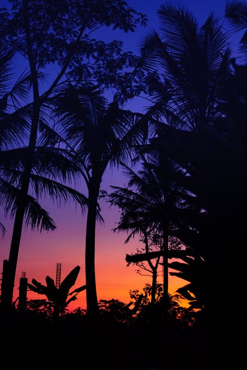 Silhouette of Palm Trees Across Blue and Yellow Sky