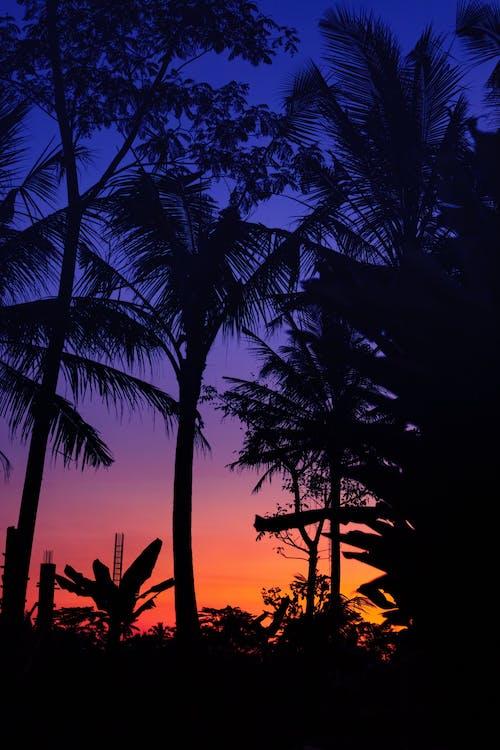 ferie, himmel, kokosnød