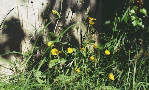 Photos gratuites de arbre, boutons d'or, champ, champ de fleurs