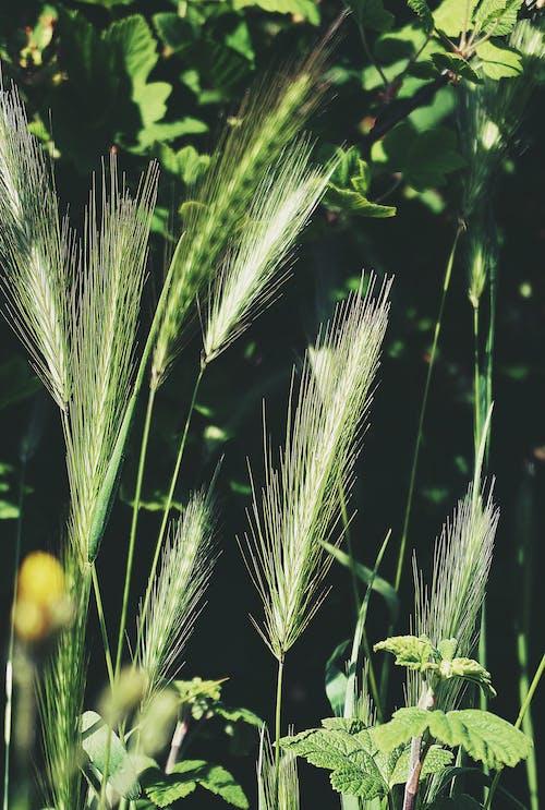 Photos gratuites de centrales, champ, été, hautes herbes