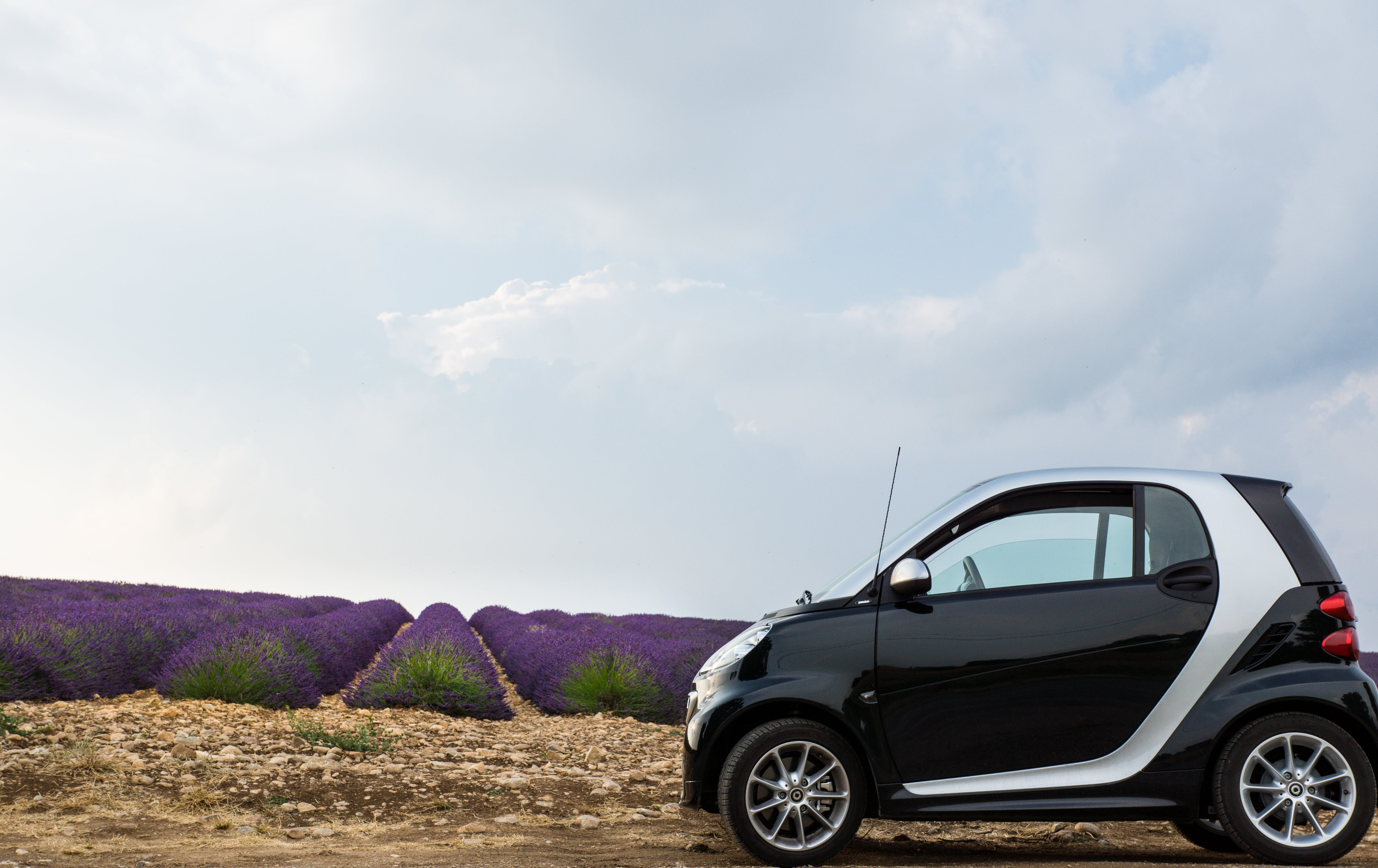 Black and Gray Hatchback in Front of Purple Plants