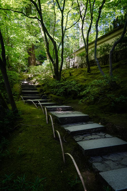 Free stock photo of foot path, garden, green, japanese garden