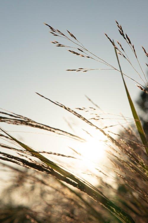 Základová fotografie zdarma na téma makro, rozostření, slunce, sluneční záře