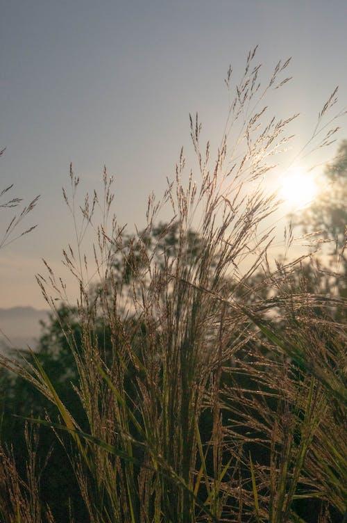 Základová fotografie zdarma na téma hřiště, makro, rozostření, slunce