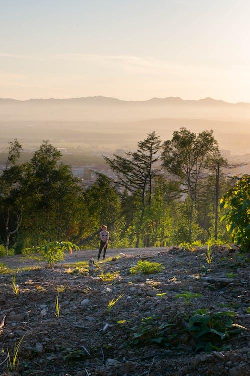 Základová fotografie zdarma na téma hora, hřiště, les, muž