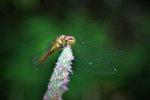 自然美 的 免費圖庫相片