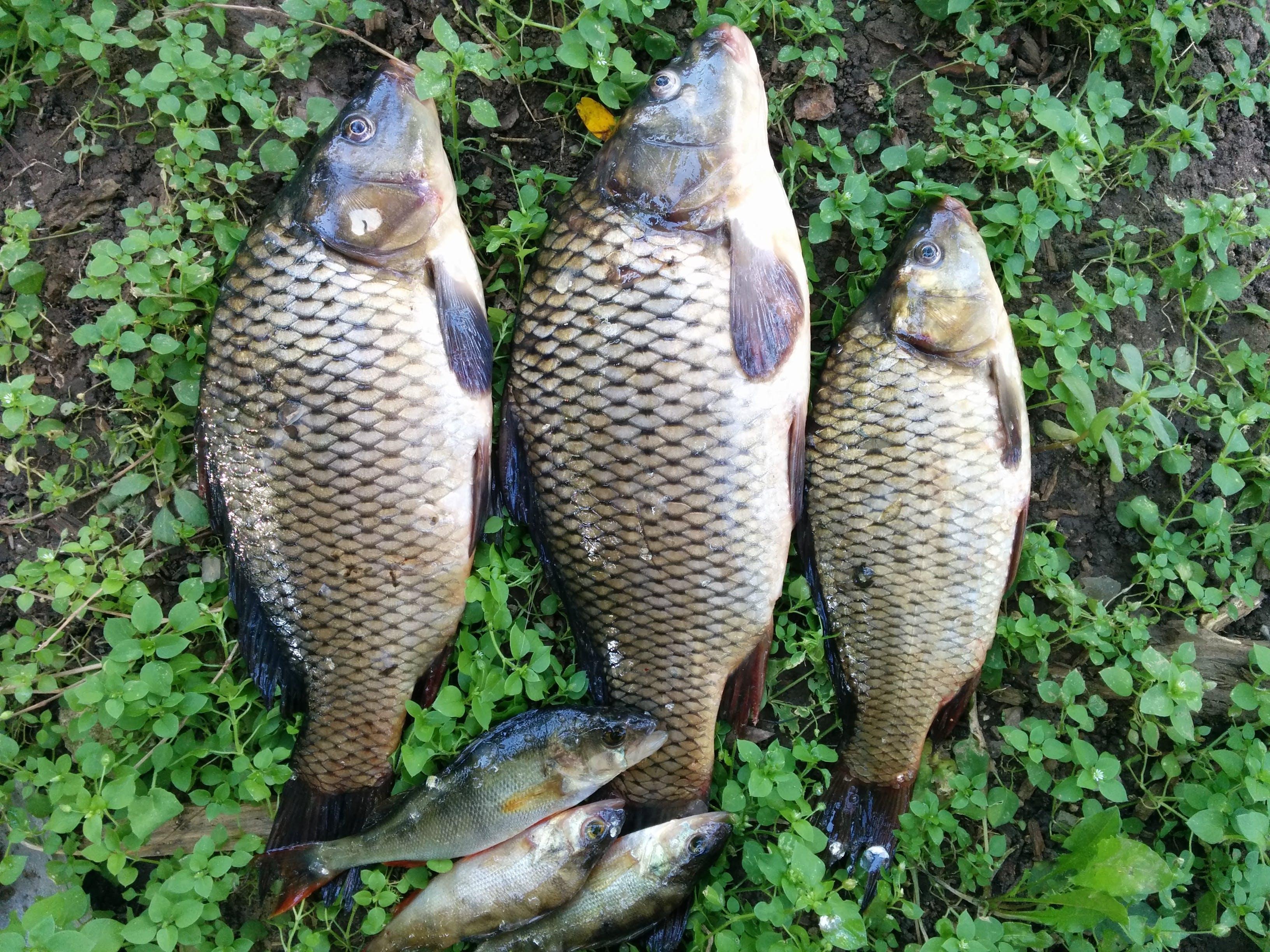 Free stock photo of fishing, summer, lake, fish