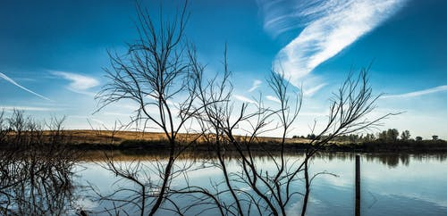 Lake With Bare Trees