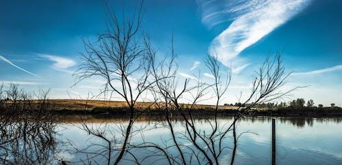 Darmowe zdjęcie z galerii z błękitne niebo, drewno, drzewa, dzień