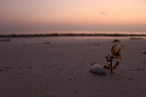 Fotobanka sbezplatnými fotkami na tému pláž, skoré ráno zavčasu ráno