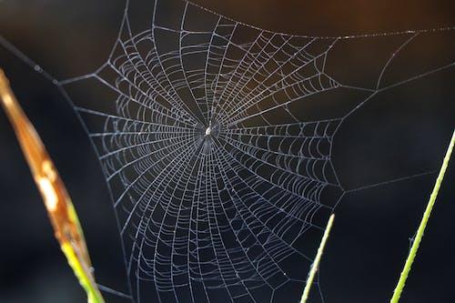 Fotobanka sbezplatnými fotkami na tému internet, pavúk