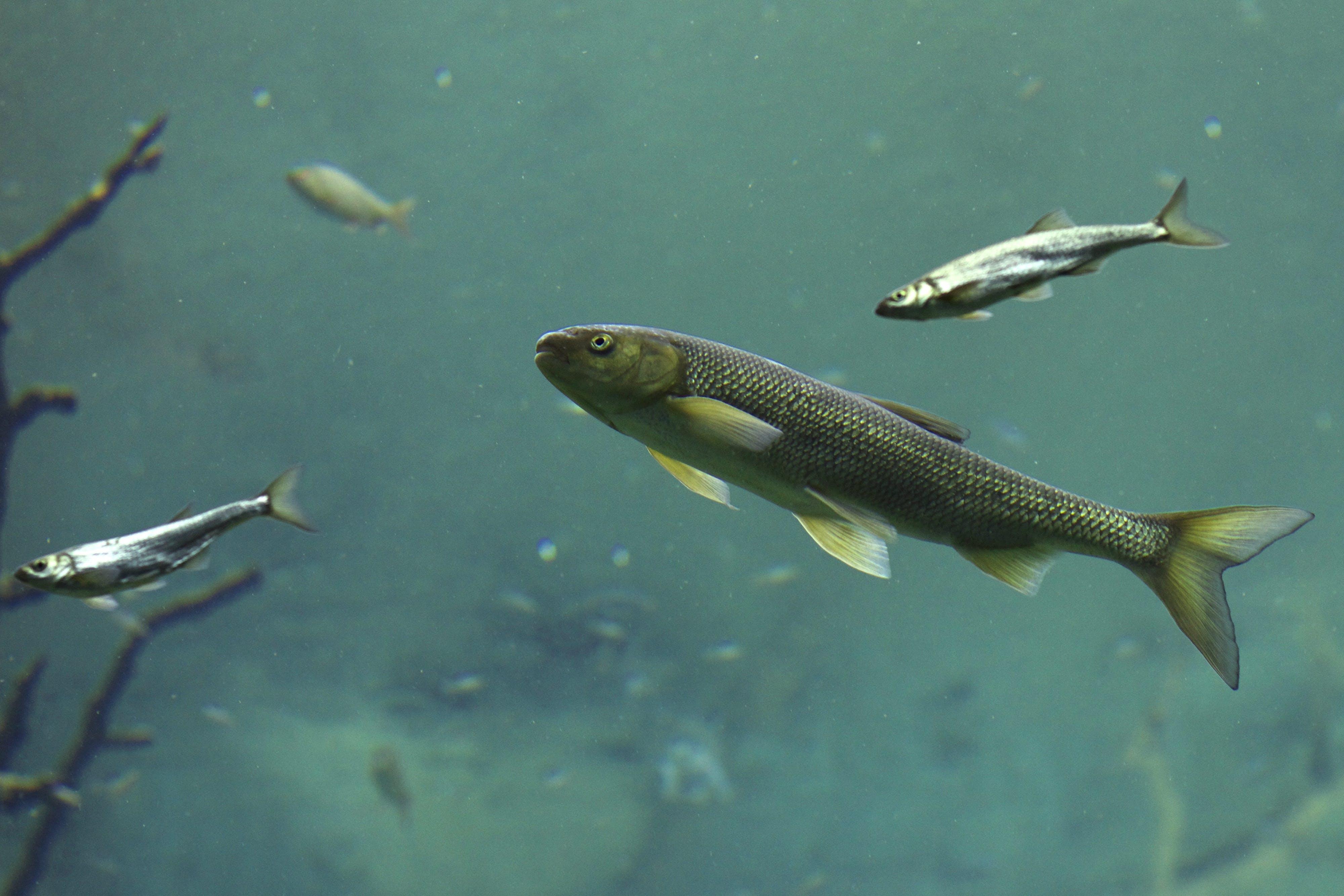 Free stock photo of aquarium, diving, fish, lake