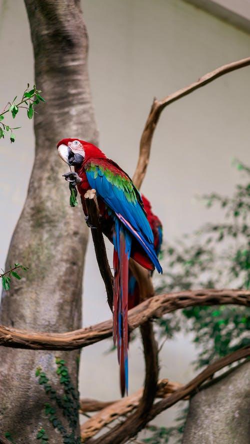 Kostnadsfri bild av djur, exotisk, fågel, färgrik