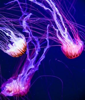 Free stock photo of fish, jellyfish, aquarium, glow