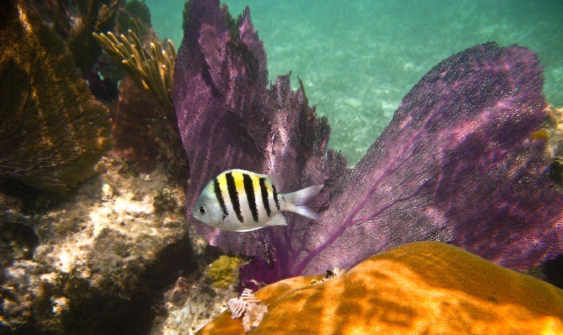 Free stock photo of sea, nature, ocean, colorful