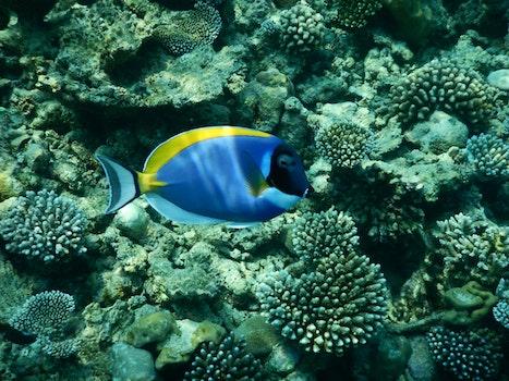 Free stock photo of sea, blue, colorful, fish